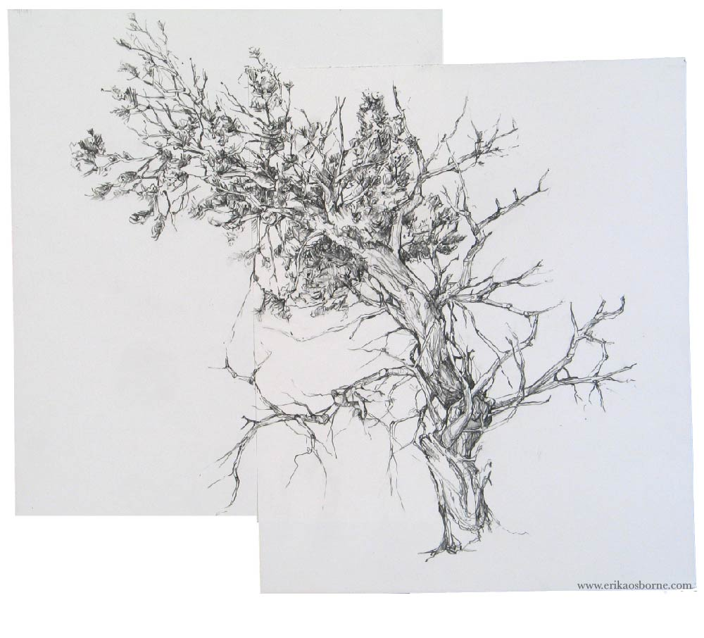 Wind Blowing Through Trees Drawing