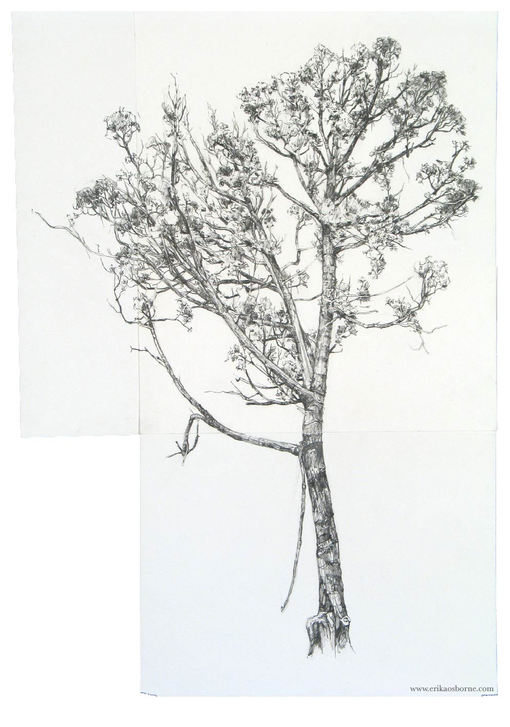 9 hours drawing jumping to keep toes warm these trees are marked for cutting a fuel break maybe in spring - Tree Drawings